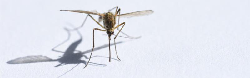 Dengue preocupa novamente
